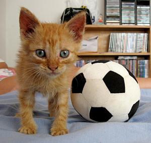 kitten-soccer-ball-college-humor