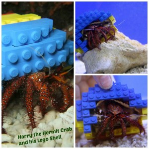 Harry the Hermit Crab in Lego Shell