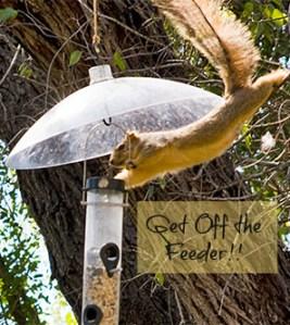 Dastardly Squirrel eating from birdfeeder