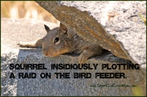 Squirrel Plotting to Get Birdseed Squirrel Wars 2016 Have Begun. Dad is --once again -- trying to keep the rodents off the birdfeeders. DearKidLoveMom