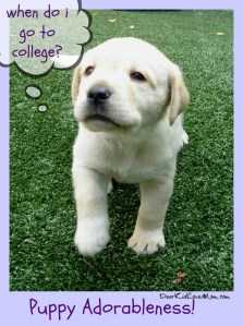 Puppy wants to go to college