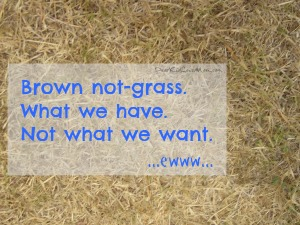 Brown grass. What we have. Not what we want. DearKidLoveMom.com