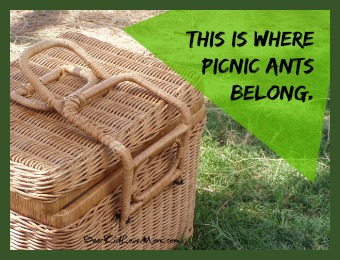 Picnic ants belong outside at picnics not in my kitchen. DearKidLoveMom.com
