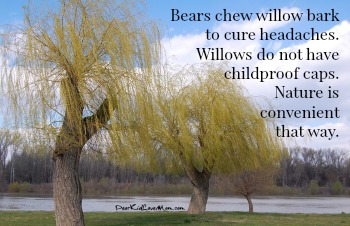 Bears chew willow bark to cure headaches. Willows don't have childproof caps. Nature is convenient like that. DearKidLoveMom.com