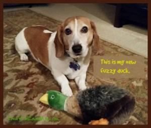 See my new fuzzy duck? DearKidLoveMom.com
