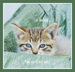 Kitten Observations. I'm hiding. You can't see me. DearKidLoveMom.com