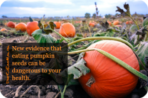 New evidence that eating pumpkin seeds can be dangerous to your health. You might grow a pumpkin in your tummy. DearKidLoveMom.com