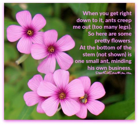 Flower pretty ants dear kid love mom flower pretty ants mightylinksfo
