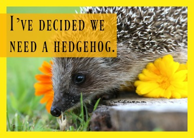 I've decided we need a hedgehog. DearKidLoveMom.com
