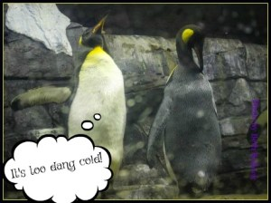 The Penguins are complaining that it's too dang cold. DearKidLoveMom.com
