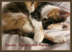 Awake Awake Not Awake DearKidLoveMom.com