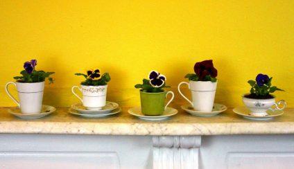 piante in cucina Archivi -