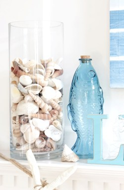 shells inside clear glass container - blue bottle fish