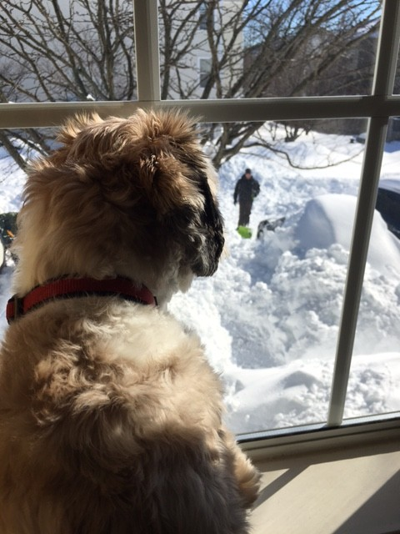 Teddy checking out the snow (Elizabeth, Virginia)