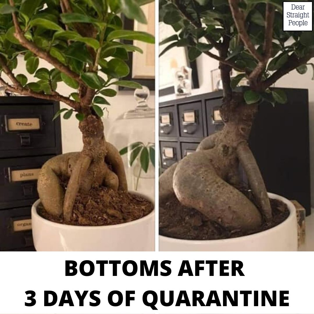 BOTTOMS AFTER 3 DAYS OF QUARANTINE