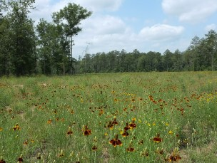Meadow off the Peach Creek Trail
