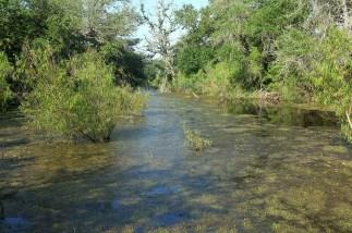 Pond at Sabine Woods