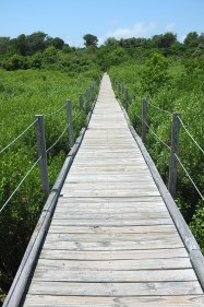 Boardwalk to observation deck