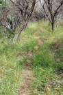 Hike up Spicewood Canyon