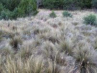 Grassy meadow on the Pinnacles Trail