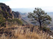 Along the South Rim Trail