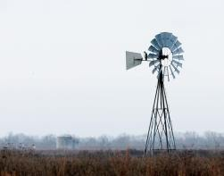 White-tailed Hawk on a windmill at the park