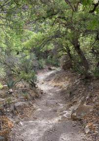 The trail dips through a scrubby forest