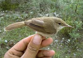 List Of Afghanistan Endangered Species Of Animals,Plants And Birds