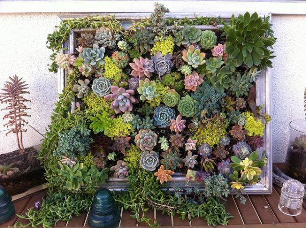 Indoor living walls nz. and here are some three dimensional ...