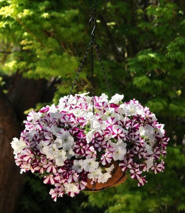 Balkon Pflanzen Und Blumen Bltenpracht Und Sichtschutz