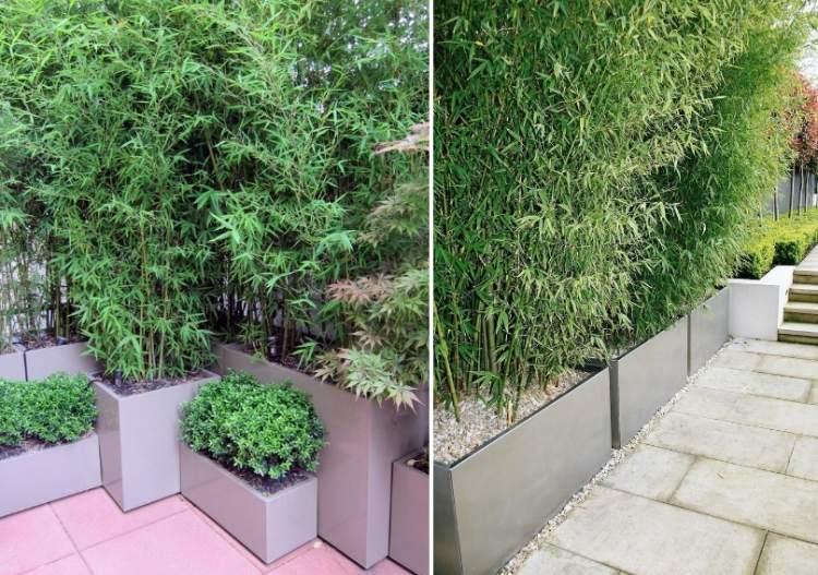 Bambus Im Kbel Als Sichtschutz Und Deko Auf Der Terrasse
