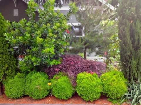 gartengestaltung mit buchs gartengestaltung buchsbaum - natacharoussel