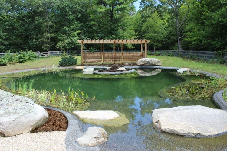 Gartenteich Im Pool Anlegen Eine Umweltfreundliche Idee