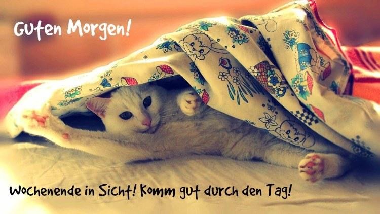 Guten Morgen Bilder Kostenlos Zum Runterladen Und Grusse Fur Whatsapp