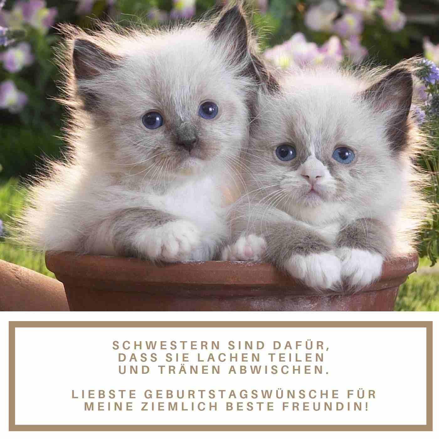 Gluckwunsche Zum Geburtstag Katze Mzia Garsevanishvili