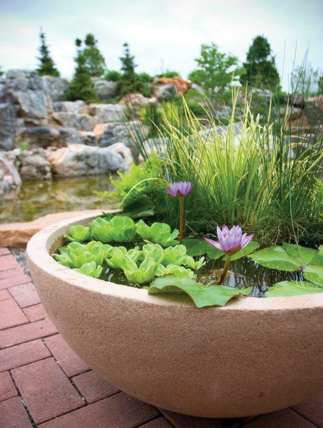 jardin aquatique en pot une petite