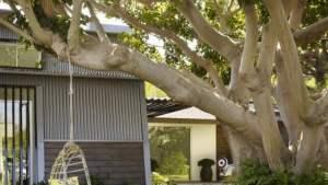 Amnagement Petit Jardin Devant La Maison Quels Arbres