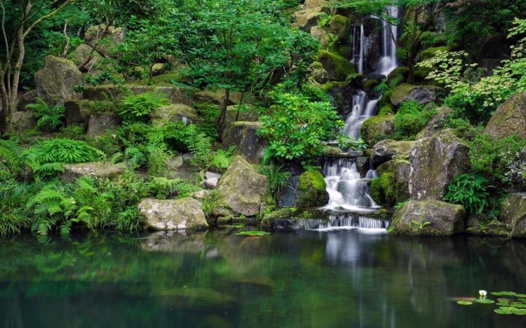 cascade de bassin en 46 photos