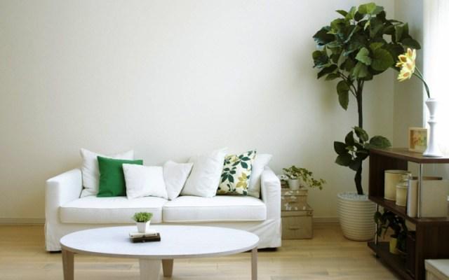 decoration-salon-plante-verte-feuilles-grandes-coussins-blanc-vert-table-basse-ronde décoration de salon