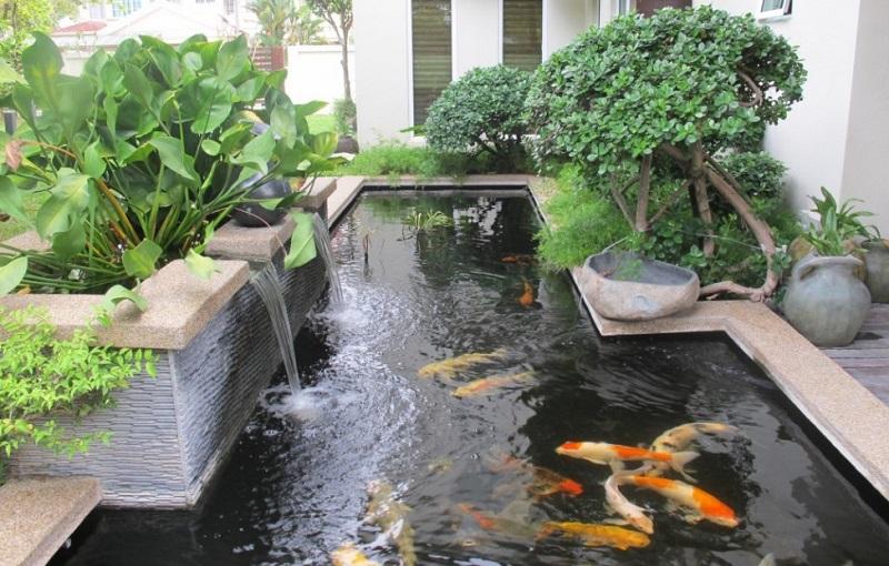 bassin a poisson moderne