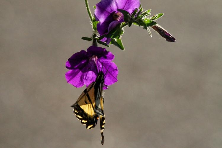 Jardin Des Papillons Conseils Sur Les Plantes Choisir