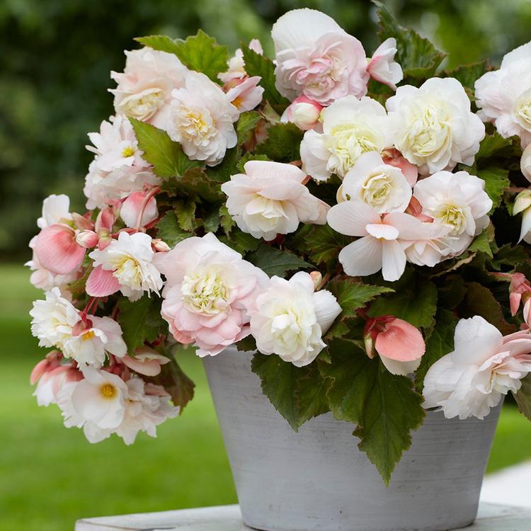 plantes d interieur parfumees une