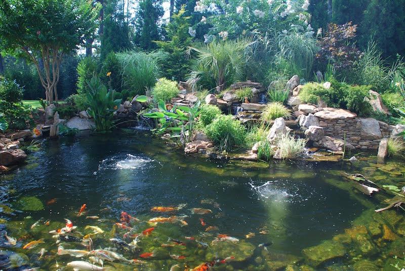Fish Pond Designs Waterfalls