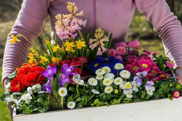 jardiniere de printemps 15 idees d