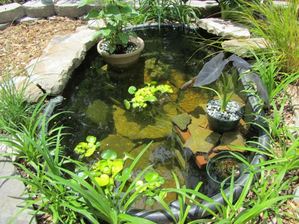 Miniature Pond Plants