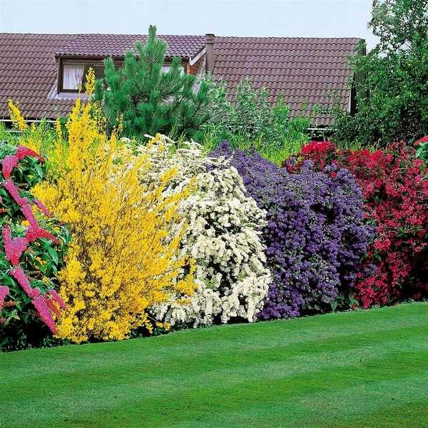 privacy plants a living fence for
