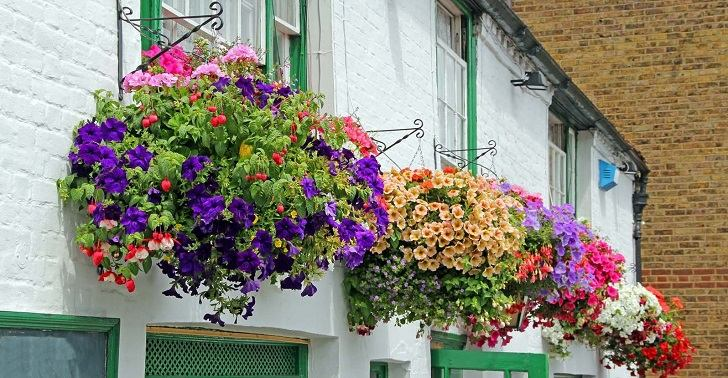 Hanging Balcony Plants And Blooming Flowers For A Spectacular Exterior