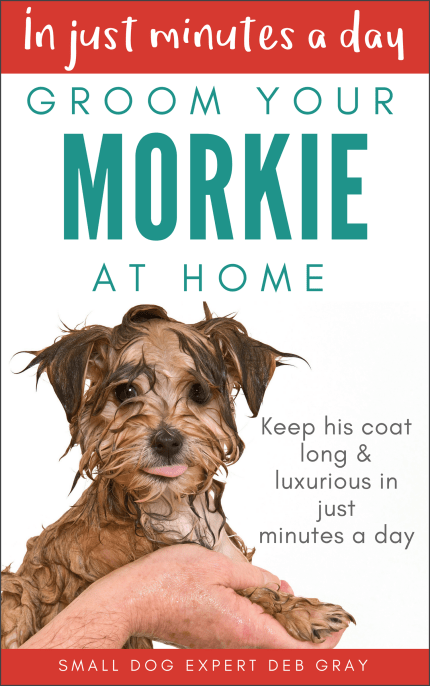 in just minutes a day groom your morkie at home