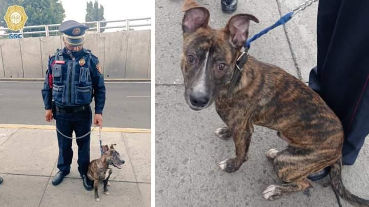 Policía adopta a perrito abandonado