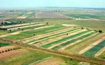 Terenurile agricole se vând ca pita caldă în Timiş